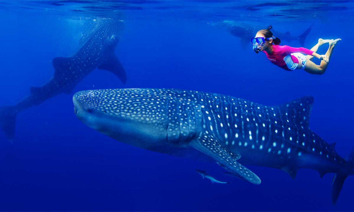 Veľrybie žraloky