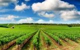 Kde je ráj milovníků vína? V Austrálii i za Kavkazem, kde lisovali už před 6000 let