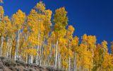 Největší strom světa: Žije už 80 tisíc let, sám se klonuje a zabírá 43 hektarů