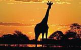 Kam na safari s celou rodinou? V Jižní Africe budete spokojeni