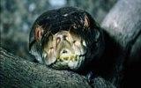 Za nejnebezpečnějšími zvířaty planety: Kde číhají mořské vosy a černá mamba?