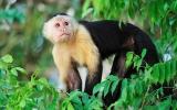Stoletý průplav a deštný prales s opicemi přímo ve městě. Vítejte v Panamě