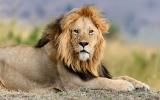 Vzrušení a krása mezi lvy: Jak vypadá safari v Jižní Africe?