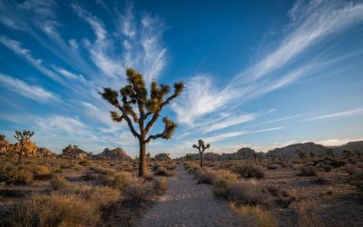 USA | Joshua Tree NP
