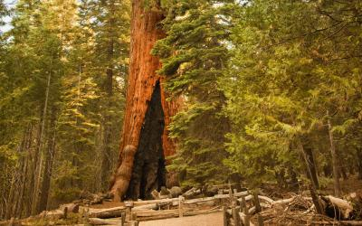 USA | Sequoia NP