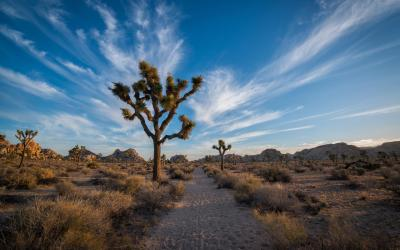 USA | Joshua Tree NP