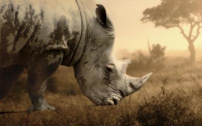 V rezervaci Karongwe | Kruger NP