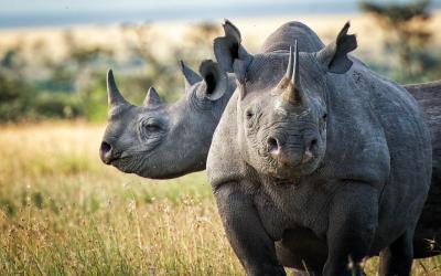 Safari v rezervaci Hluhluwe | Hluhluwe