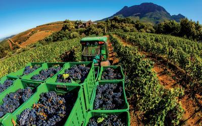 Vinice v oblasti Stellenbosch | Jižní Afrika