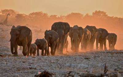 Safari v Etosha NP | Namibie