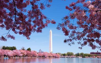 Washington Monument | Washington D.C.