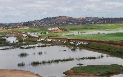 Madagaskar - rýžová pole