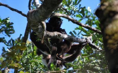 Lemur | Madagaskar - Národní park Ranomafana 04