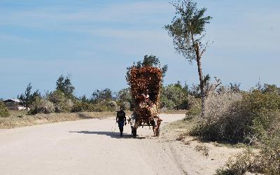 Madagaskar buvolí povoz | Madagaskar - Tuleár 2