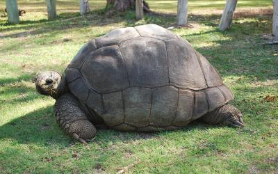 Želva | Mauritius 2