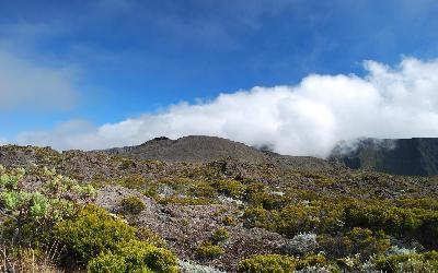 Sopka s vegetací | Réunion Piton de la Fournaise