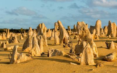 Pinecles | Australia