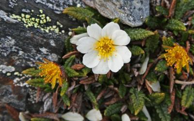 Špicbergy | Špicberská flora