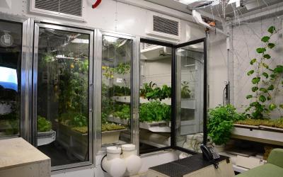 Pro osádku stanice se přímo na pólu pěstuje zelenina