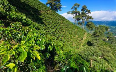 coffee region |  Kolumbie