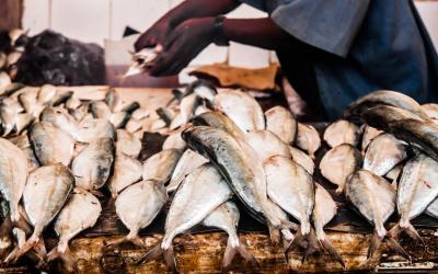 Rybí trh ve Stone Townu