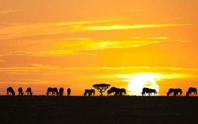 NP Serengeti
