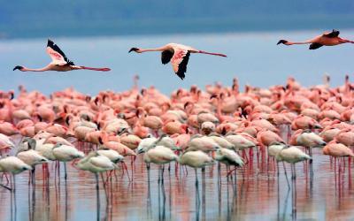 Lake Nakuru NP | Keňa