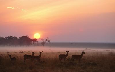 Masai Mara NP | Keňa
