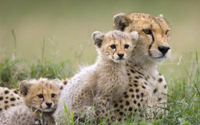 Tanzania | Serengeti NP