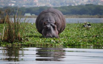 Keňa | Lake Naivasha