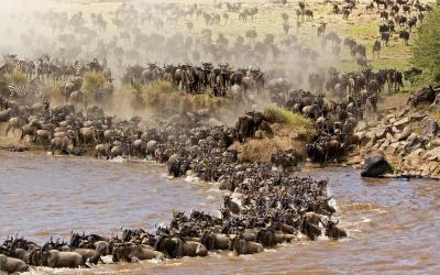 Keňa | Masai Mara NP