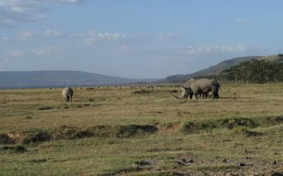 NP Lake Nakuru