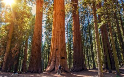 USA   Sequoia NP
