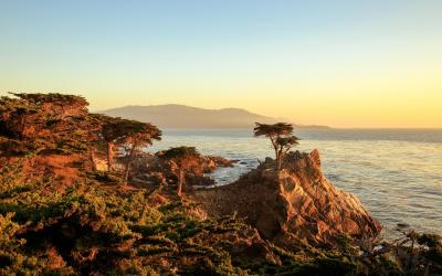 USA | Lonely Cyprus - Monterey