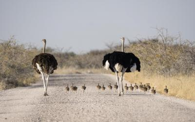 Namibie | Etosha National Park