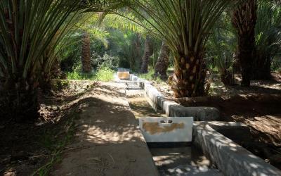Al Ain oasis zavlažovací systém