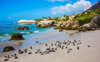 Tučňáci na pláži Boulder Beach nedaleko Simons Town | Jižní Afrika