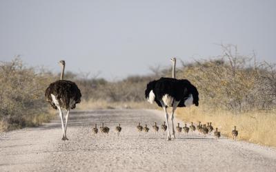 Etosha NP | Namibia