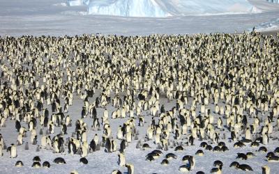 Kolonie čítají tisíce jedinců
