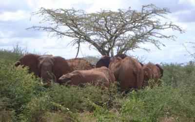 Tsavo West - sloni