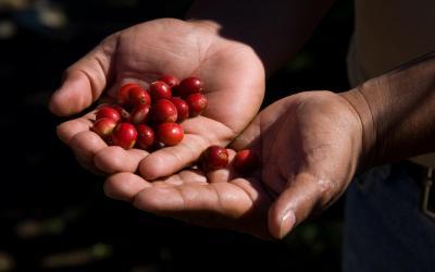 Kostarika | Káva