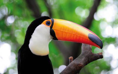 Kostarika | Tucan