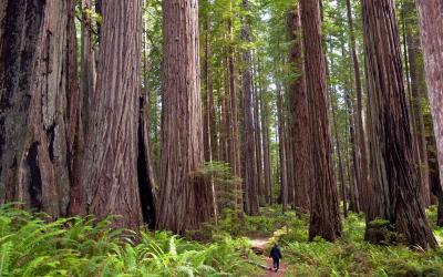 USA | Redwood NP