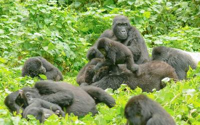 Uganda | Bwindi National Park