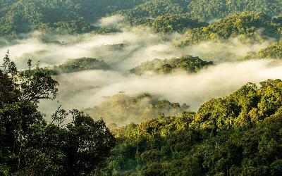 Rwanda | Nyungwe National Park