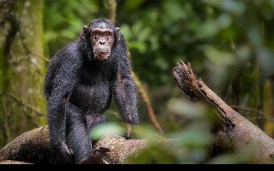 Uganda | Budongo Forest