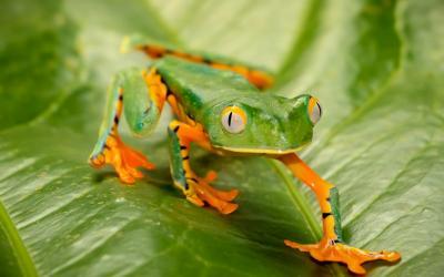 Kostarika | Monteverde