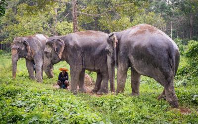 Thajsko | Phuket_Elephant Sanctuaries