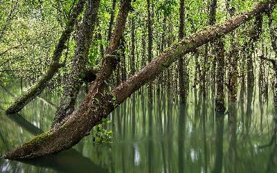 Australia | Daintree Rainforest