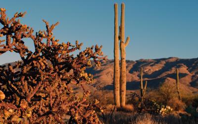USA | Saguaro NP